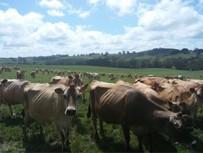 脱脂粉乳生産国視察の写真3